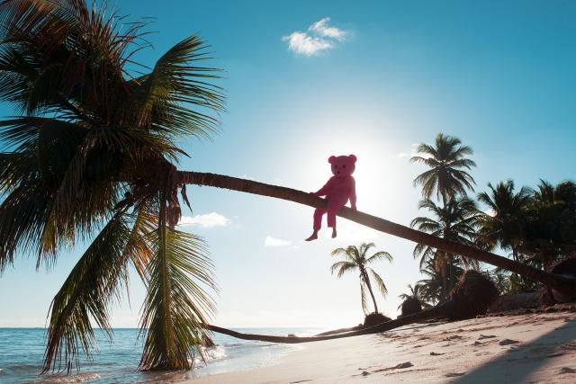 Pink Bear Palm