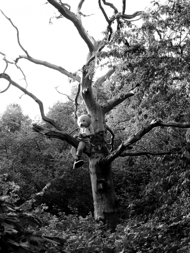 pink bear climbing a tree in epping forest. Black and white photograph.