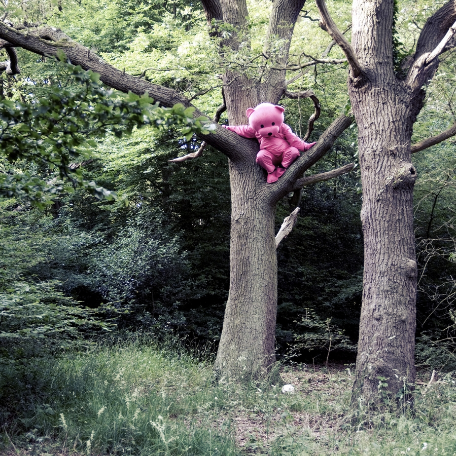 Recollection Of Innocence - Pink Bear Photograph